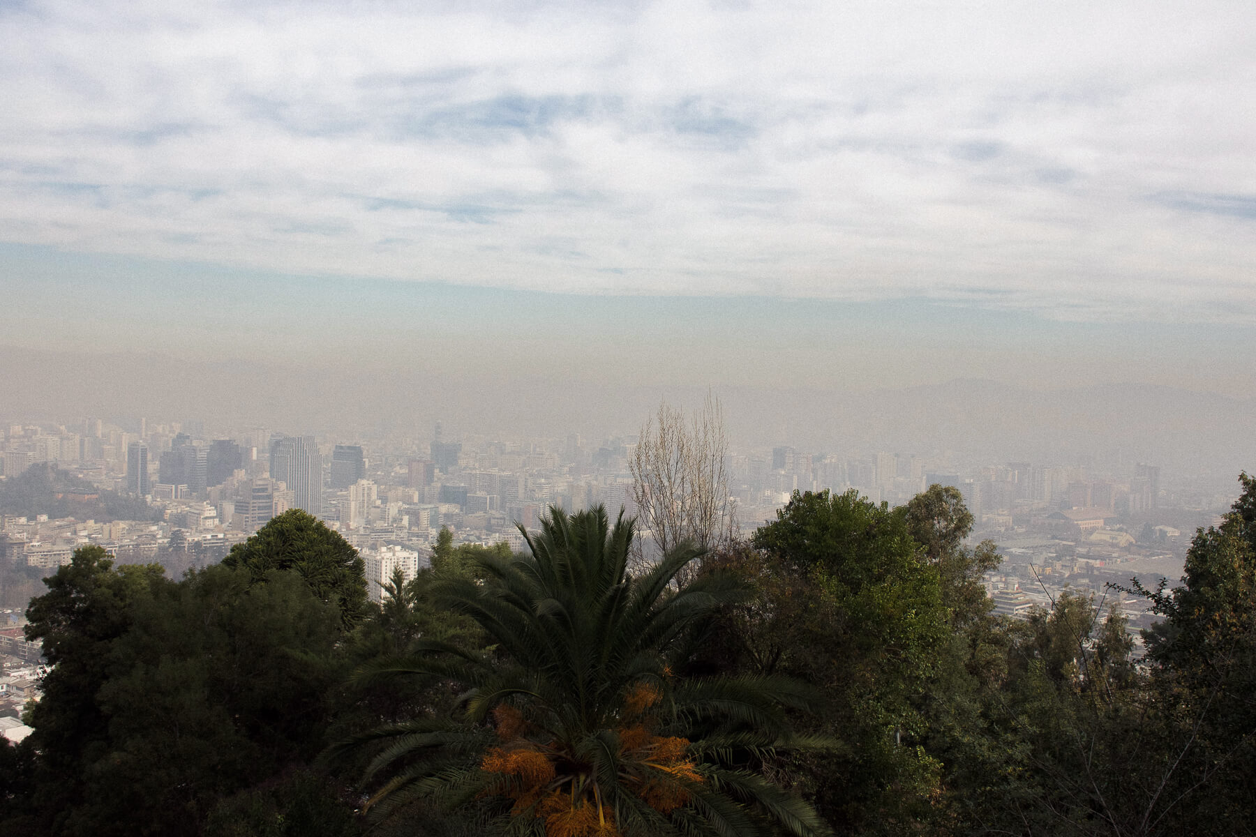 City scape behind a line of trees with smog lying in the air above