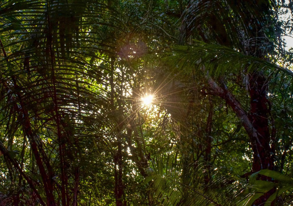 Palm trees with a sun star shining through the leaves