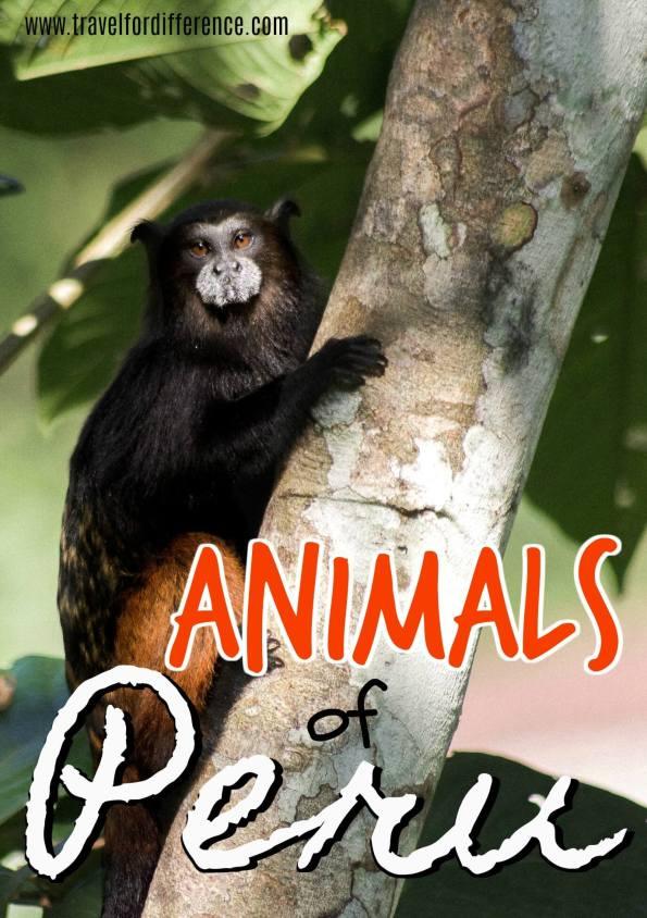 Animals of Peru