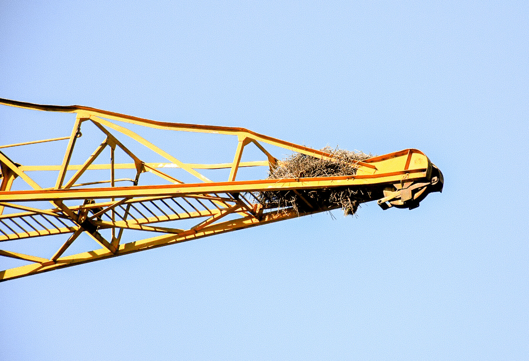 The top of a huge yellow crane with a big bird next at the tip
