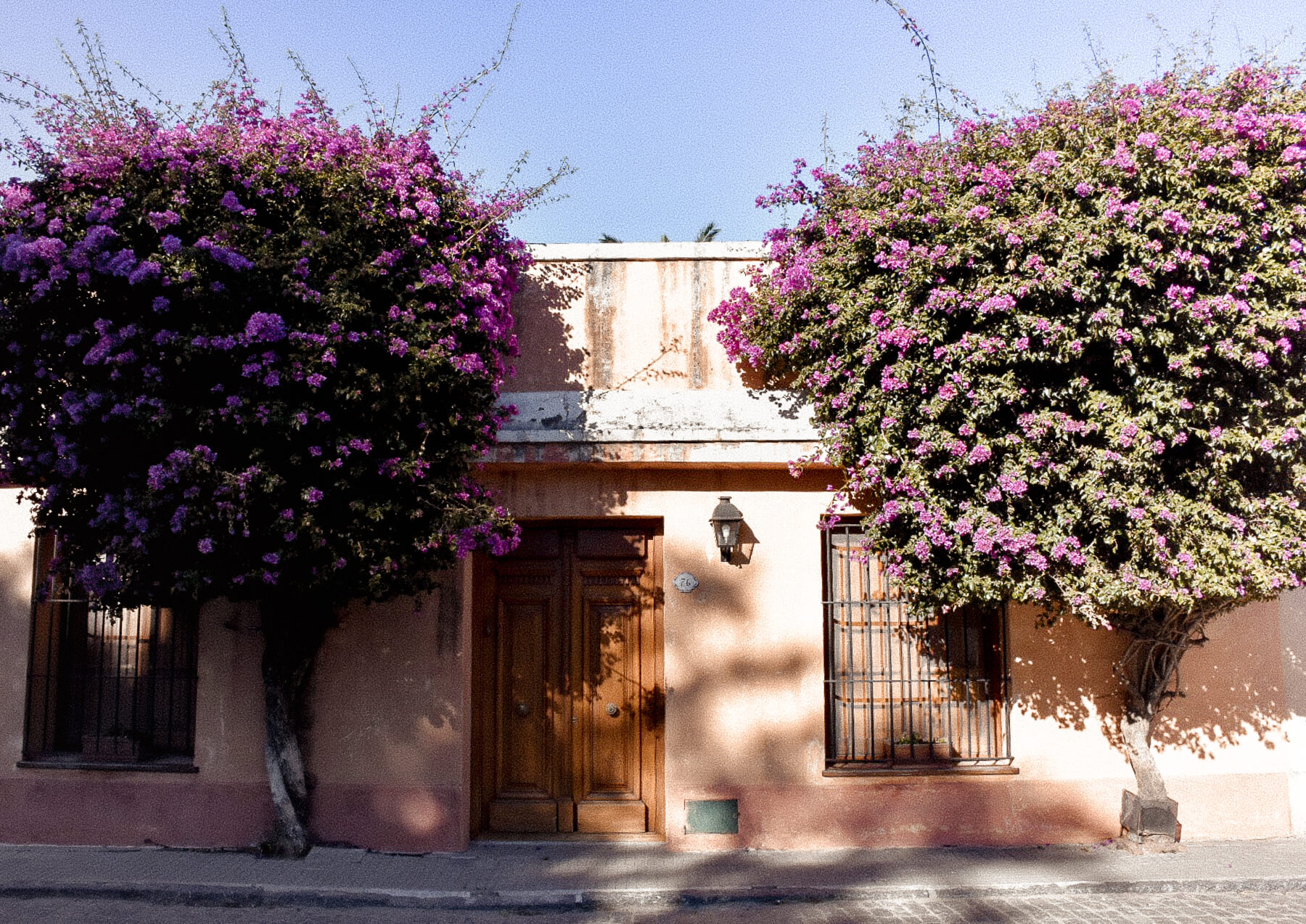 A peachy coloured building with 2 green trees covered in pink flowers on either side of the door