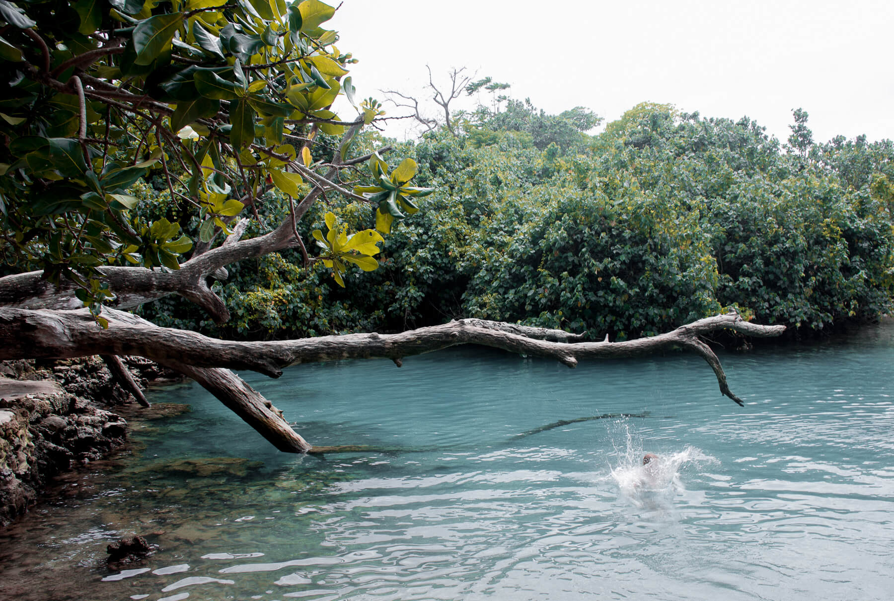 A person jumping of a tree branch into a blue lagoon creating a big splash