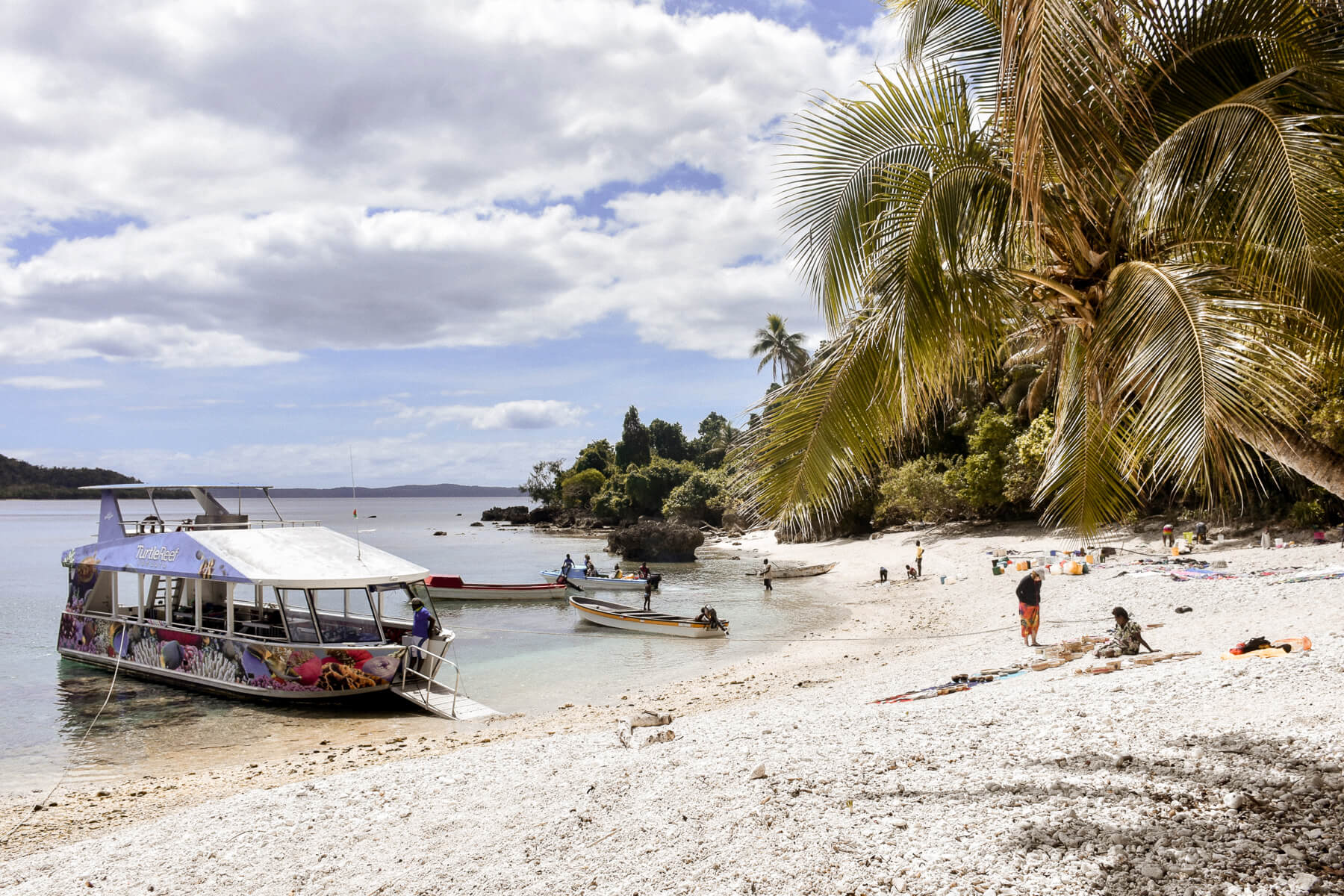 Local beach with palm trees and boats on the water