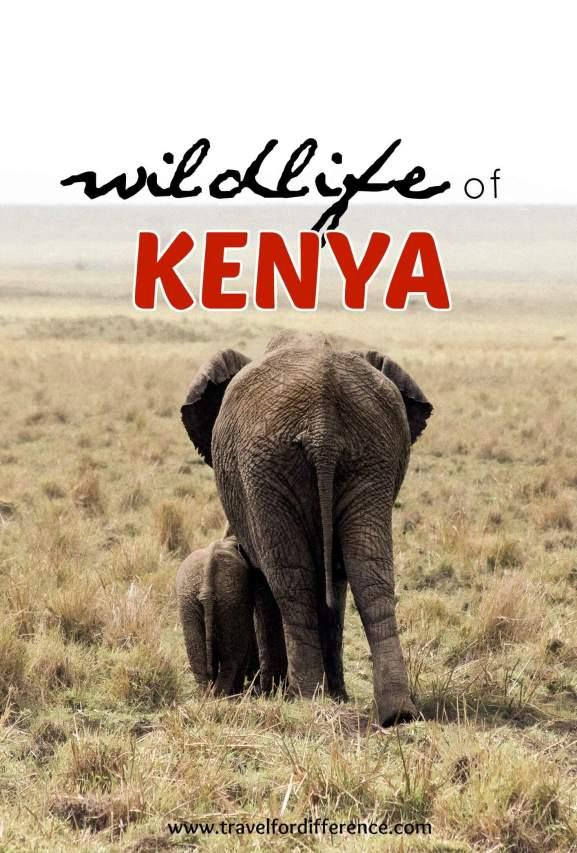 Wildlife of Kenya (Mother and baby elephant)