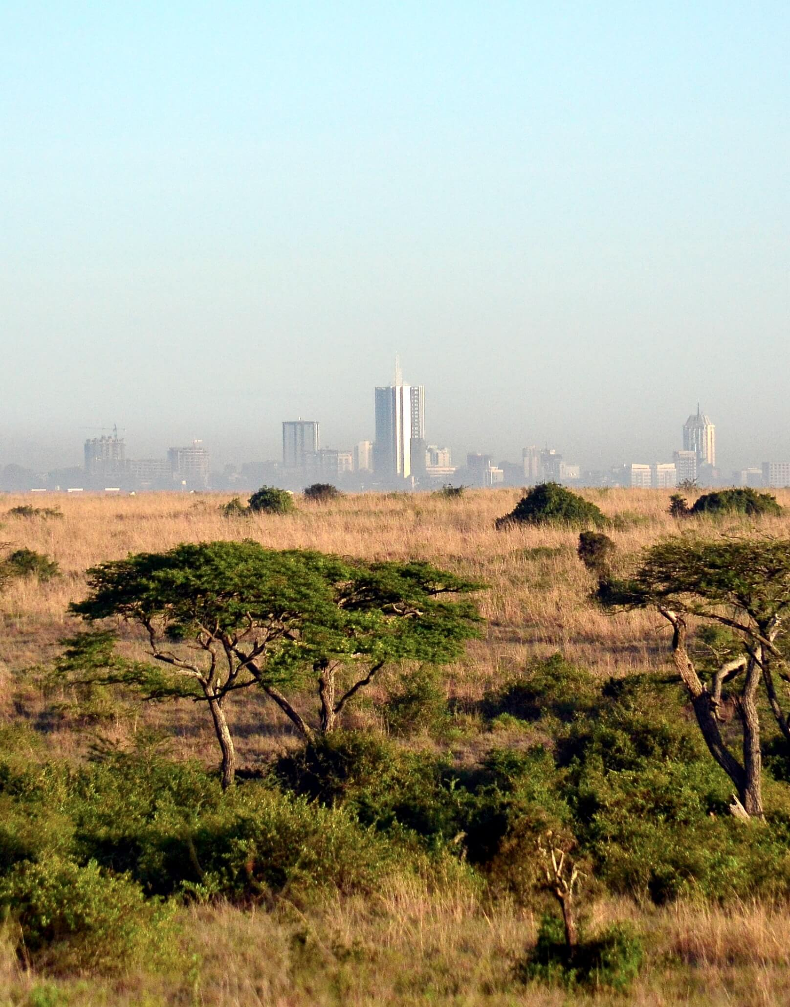 Looking over the Nairobi National Park at the city skyline in the horizon