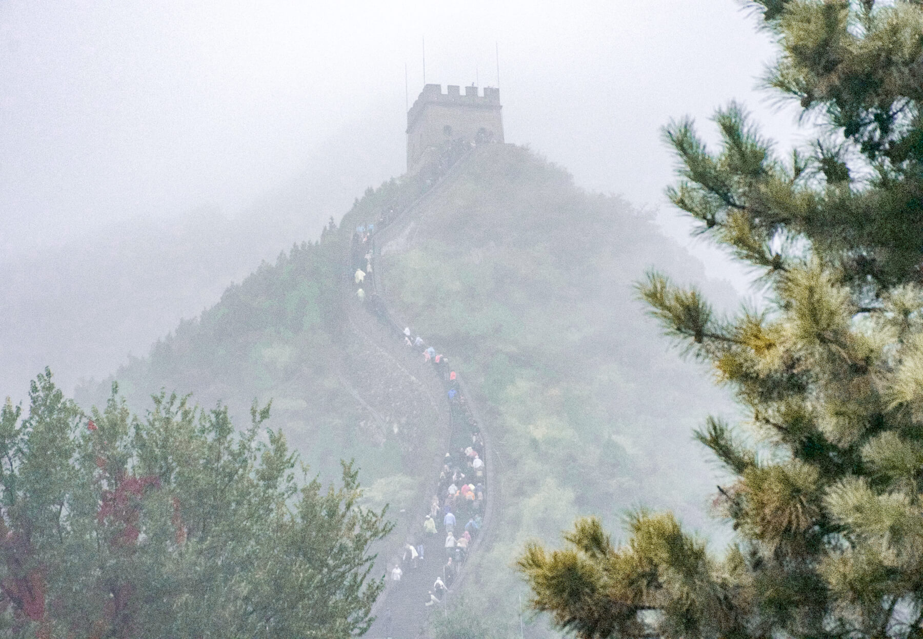 A big group of tourists walking up the Great Wall in the background behind a pine tree