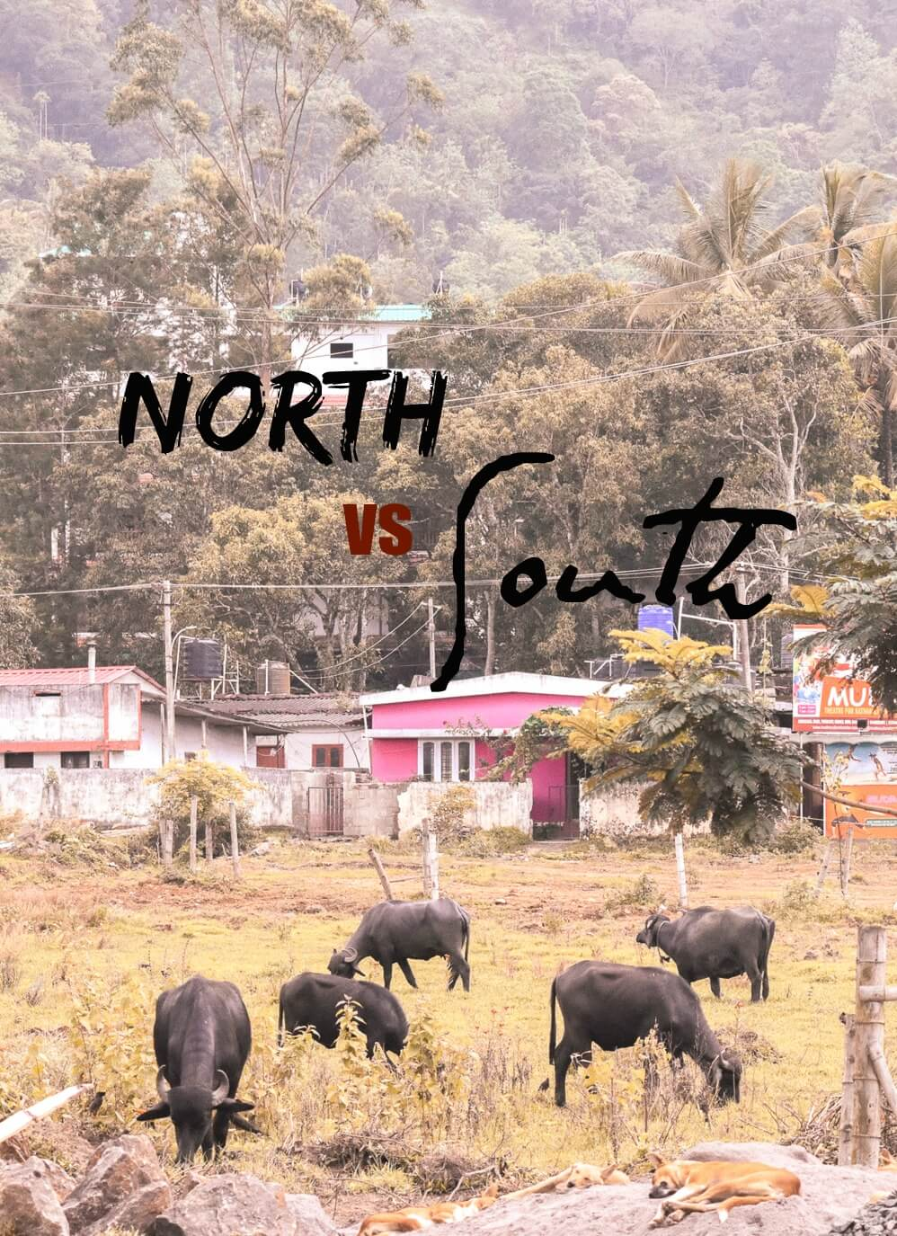"Cattle grazing in front of village in India with text overlay - ""North VS South India"""