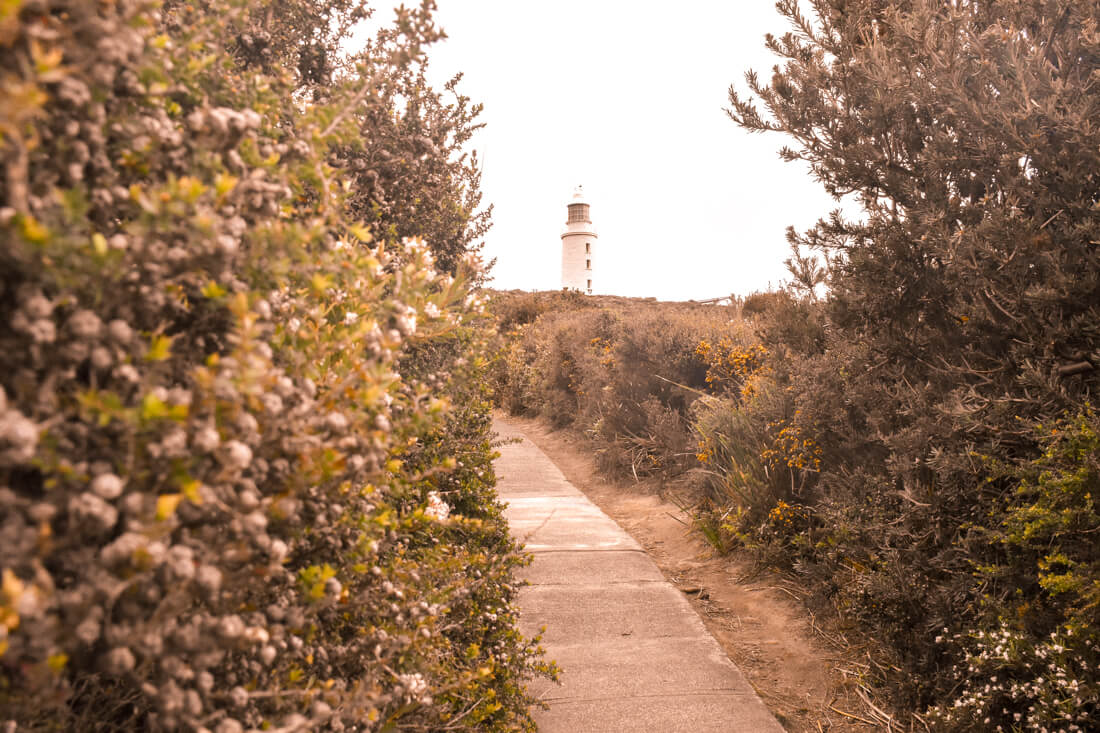 Looking between flowery bushes to a lighthouse on top of a hill