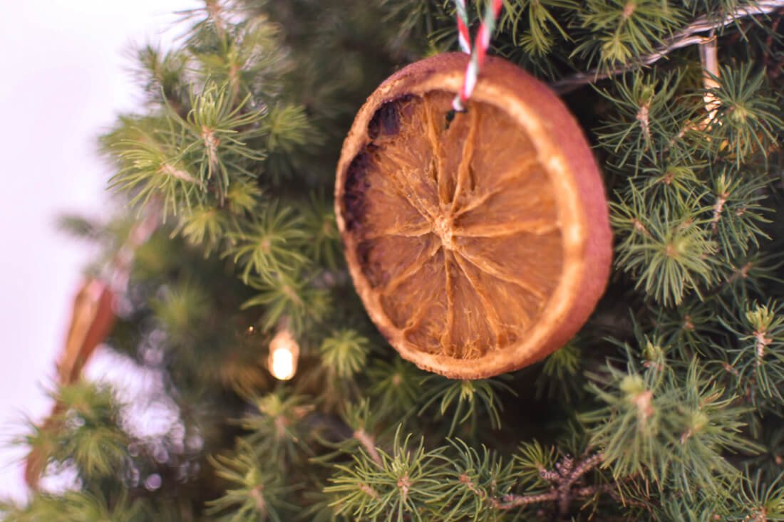 Close up of dried orange Christmas ornaments hanging on a tree