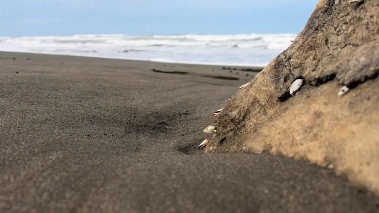 Costa Rica, Tortuguero: di carapaci e sabbia