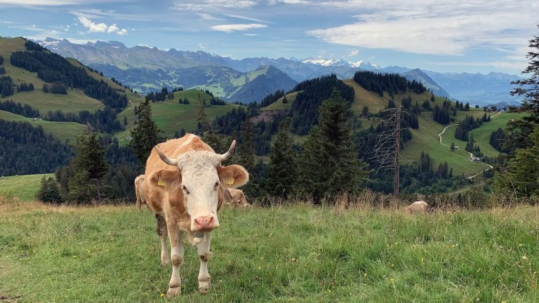 Una giornata in Svizzera sui monti di Annette