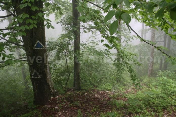 Traseul turistic Valea Sighistelului - drumul Calea Fusului