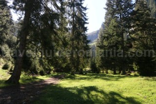 Marcaj triunghi rosu - Cascada Cailor - Muntii Rodnei