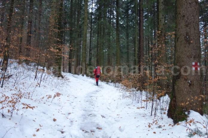Traseu turistic spre Cascada Duruitoarea - Muntii Ceahlau