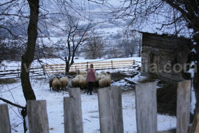 Stil de viata traditional din satul Rogojel - Muntii Apuseni