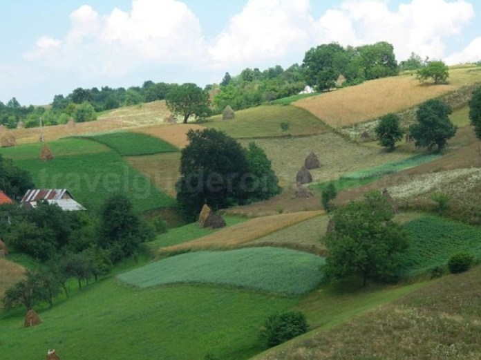 agricultura-traditionala-runcuri-rosia-Padurea-Craiului-Apuseni