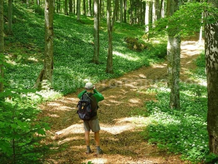biking valea bratcutei mtb Padurea Craiului Apuseni