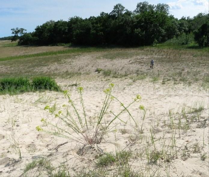 rezervatia biosferei delta dunarii dune padurea letea