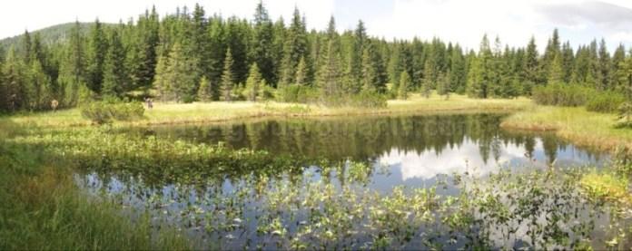 lacul violeta muntii latoritei