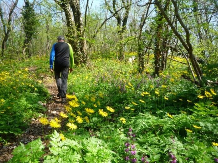 Parcul National Cheile Nerei-Beusnita Lacul Dracului flori