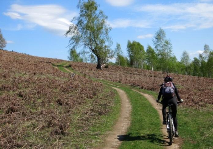 mountain biking Ponoară Pădurea Craiului