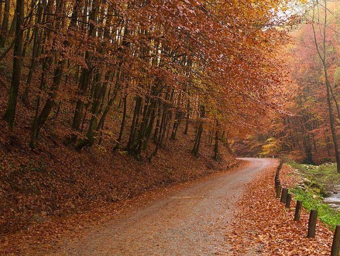 Valea Bratcutei Pădurea Craiului Apuseni