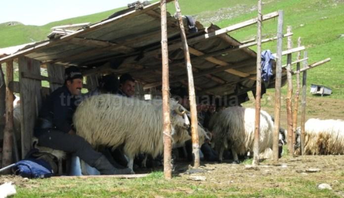 destinația ecoturistică Țara Dornelor stana muls suhard