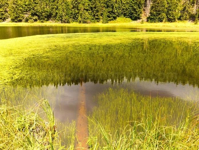 transalpina latoritei lac