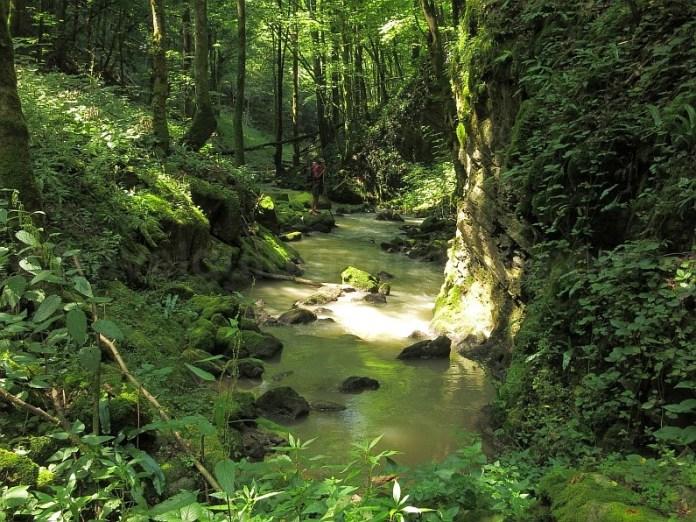 Pădurea Craiului izbucul Bulbuci Roșia