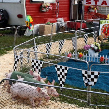 Rosie's Racing Pigs, Addison County Field Days