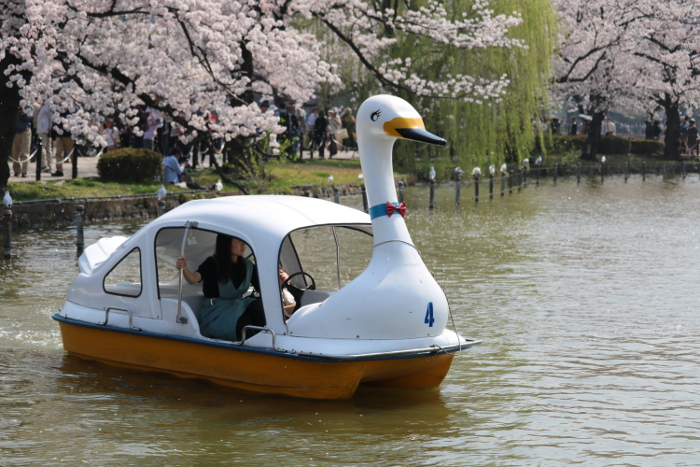 Things to do in Tokyo: Shinobazu Pond
