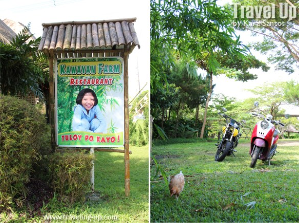 kawayan farm 04