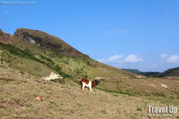 sabtang island batanes chamantad goat
