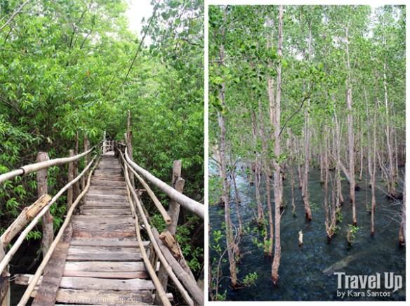 siquijor guiwanon spring park mangroves