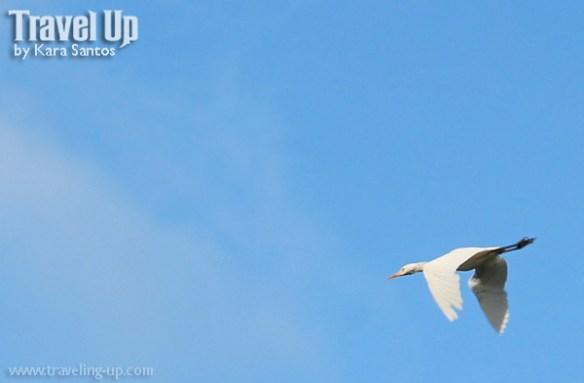 05. mt iraya batanes bird