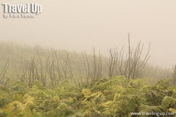 13. mt iraya batanes foggy summit