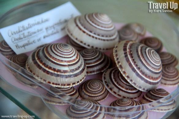bico shell museum minalabac camarines sur shells
