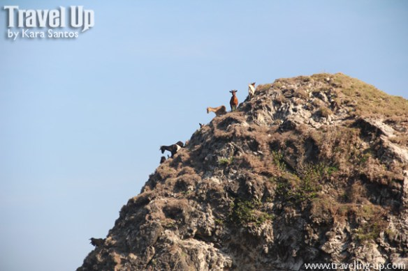 03. mountain goats on cliffs in calayan babuyan islands
