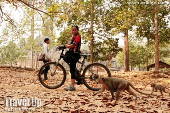 biking cambodia angkor archaeological park bayon monkeys