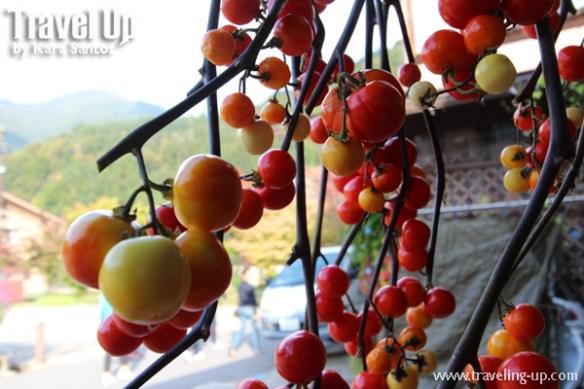08. shirakawago village japan autumn harvest