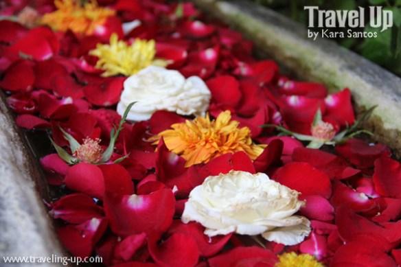02. sonyas-garden-tagaytay-flowers-water