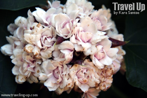 10. sonyas-garden-tagaytay-flowers