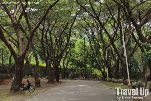 momarco resort tanay rizal road trees
