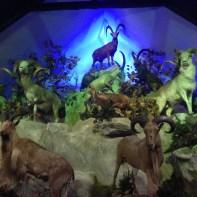 Musée parc animalier des Pyrénées