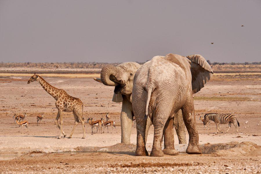 Safari al Parco Nazionale Etosha pozza