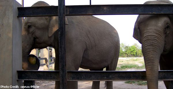 Phnom-Tamao-Wildlife-Rescue-Center
