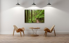Baden Powell Trail Boardwalk - Canvas Print in Waiting Room