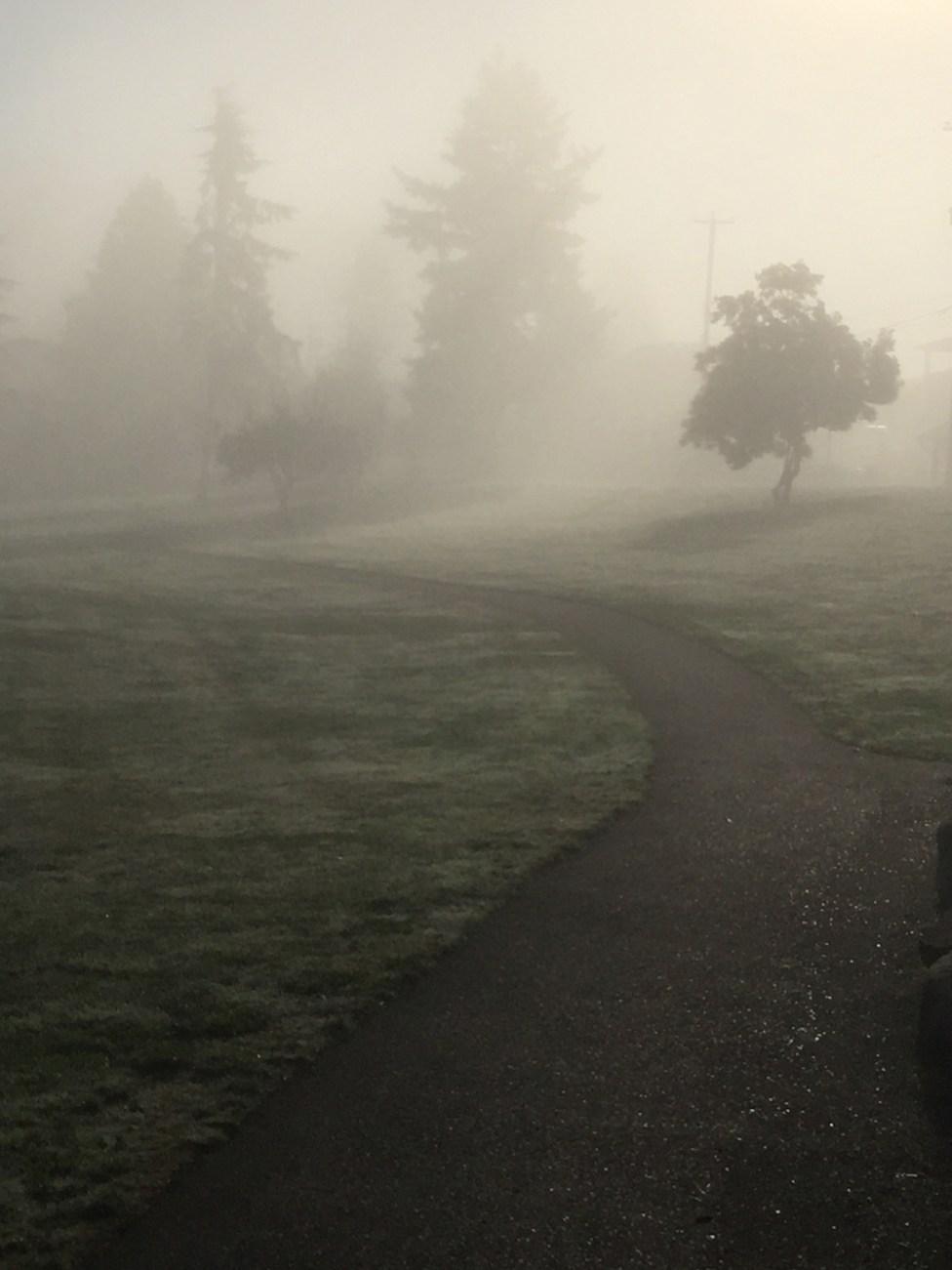 morning-fog3