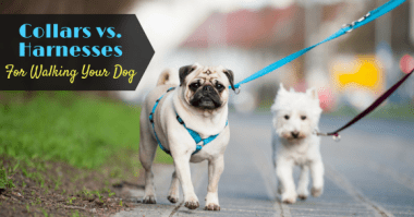 K9 Harness Dog Collars vs.Dog Harnesses