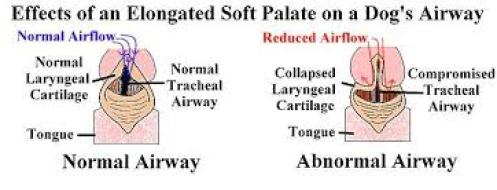 Elongated soft palate
